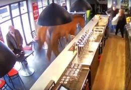 Во Франции лошадь сбежала от наездника и ворвалась в бар