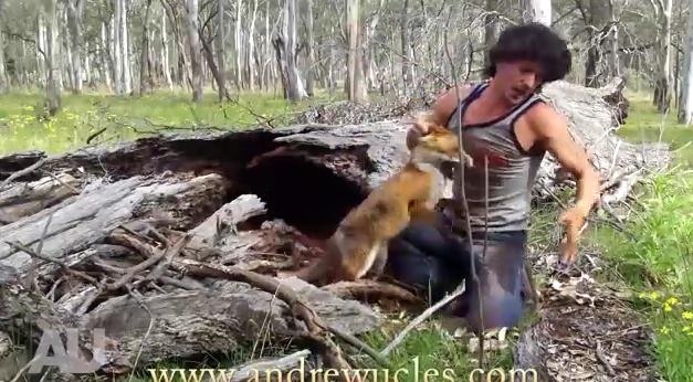 ловля зверей видео