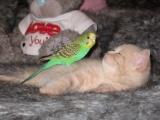 Невероятная дружба котёнка и попугая