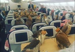 Саудовский принц посадил в самолет 80 соколов