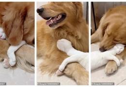 Как выглядит настоящая дружба между кошкой и собакой