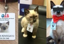 Как бездомный котенок получил должность помощника адвоката
