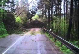 Массовое падение деревьев на горной дороге