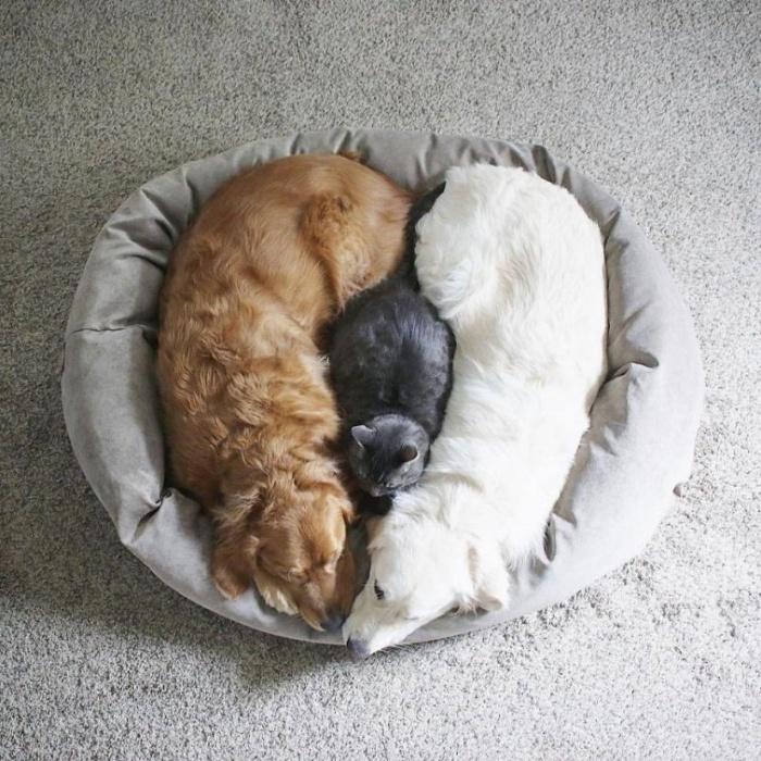 Две собаки и кот — три лучших друга, которые всё делают вместе
