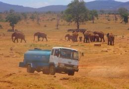 Водитель в Кении каждый день привозит воду диким животным