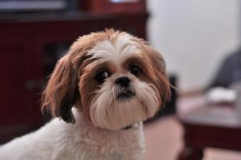 Сбежавшая собака нашлась спустя 4 года и тысячу километров