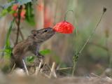 Животные, которые любят вдыхать аромат цветов