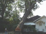 Как не надо пилить дерево у себя во дворе