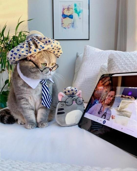 Кот-подобранец стал звездой Инстаграма