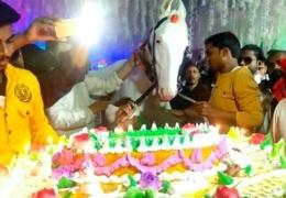 Мужчина устроил пышный день рождения для своей лошади