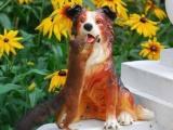 Белка и собака - чуства без взаимности