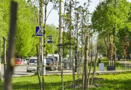 В 2016 году больше всего деревьев в Нарве высадят возле территории Transservis-N