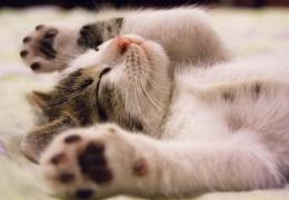 Теперь домашние животные, содержащиеся в коммерческих целях, должны быть внесены в регистр