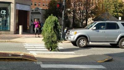 Полиция арестовала мужика-дерево за то, что он рос посреди дороги