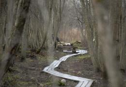 Обвиняемый в убийстве 14-летней нарвской школьницы Дарьи отрицает в суде свою вину