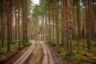 Заблудившийся в лесу человек дважды пересек границу