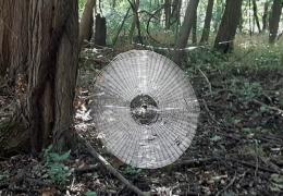 В лесу нашли огромную паутину, в которую может попасться даже человек