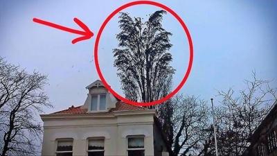 Он просто снимал на видео дерево... Как внезапно стая птиц начала делать ВОТ ЭТО!