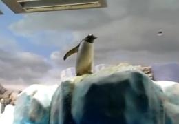 Подборка приколов с пингвинами