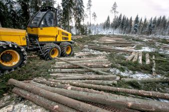 В лесной промышленности Эстонии может быть объявлено кризисное положение