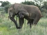 Самый аккуратный слон на свете