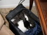 Куда же мне пристроить кота?