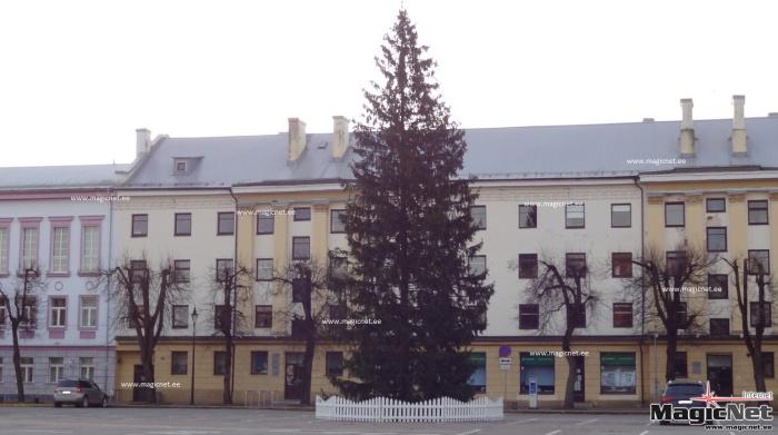 В Нарве установили новогоднюю ель и повредили светофор, когда ее везли