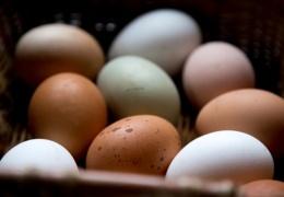 В Эстонии выросло производство яиц и молока