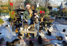 Житель Нью-Йорка поселил 300 кошек у себя дома