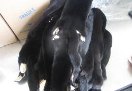 Гражданка РФ из Нарвы на границе в Ивангороде не задекларировала 17 выделанных норковых шкурок