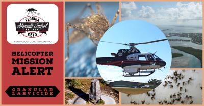 Флорида приняла участие в необычном эксперименте по сокращению популяции комаров Aedes aegypti