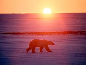 За кормление медведицы взрывпакетом завели уголовное дело