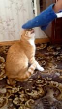 Самый мстительный кот, который заставил человека бояться