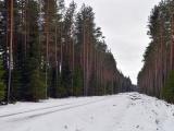 Лесник Ида-Вирумаа: решение о прекращении вырубки леса в Нарва-Йыэсуу должны принять политики