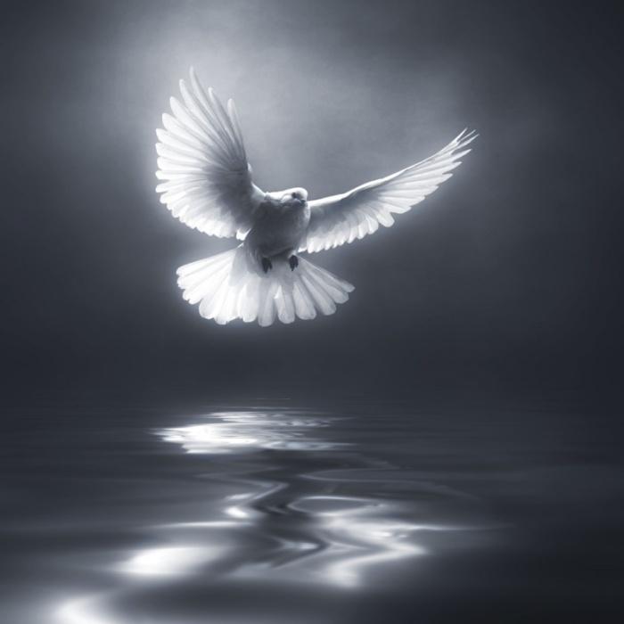 Птицы в фотографиях Хосепа Сумалла
