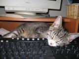 Кошачья любовь к компьютерам