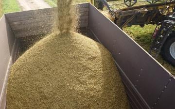 Фермеры в Южной Эстонии прогнозируют близкий к рекордному урожай