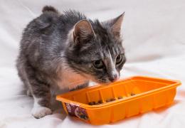 Сердобольные нарвитяне создают свои приюты для животных