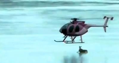 В Канаде пилот вертолета вызволил оленей, застрявших посреди озера на тонком льду