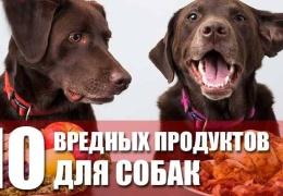 Продукты вредные для собак