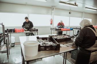 Рыбзавод Kirderand переехал из Нарва-Йыэсуу в Нарву