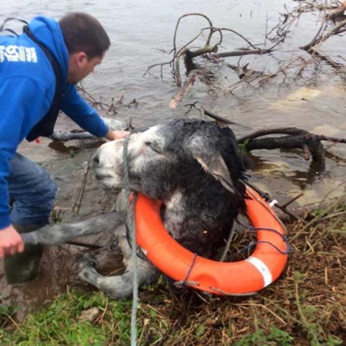 Улыбчивый осел был безумно рад тому, что его спасли от наводнения