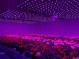 Будущее сельского хозяйства - скоростное выращивание культур без дневного света