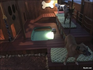 Игровая площадка с мини-бассейном для собак