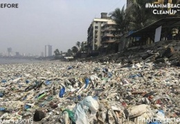 Добровольцы показали, как теперь выглядит пляж Махим Бич в Мумбае