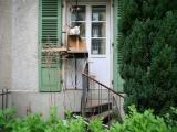 Странный феномен кошачьих лестниц в Швейцарии
