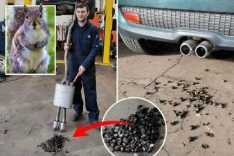 Автомобиль отправился в автосервис после того, как белка спрятала сотни орехов в выхлопной трубе