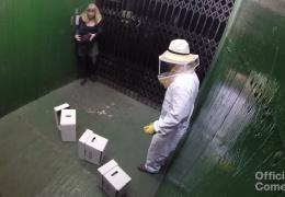 Пчелы в лифте