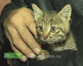 В Братске спасли котенка, забравшегося в вентиляционную шахту и пролетевшего три этажа
