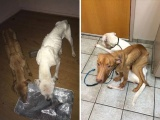Из ходячих скелетов в здоровых и жизнерадостных собак